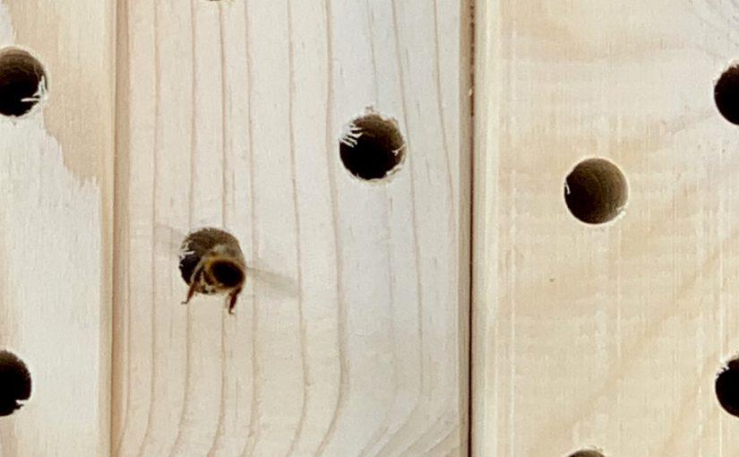 Help mee aan de bestuiving van planten, neem knuffelbijen!