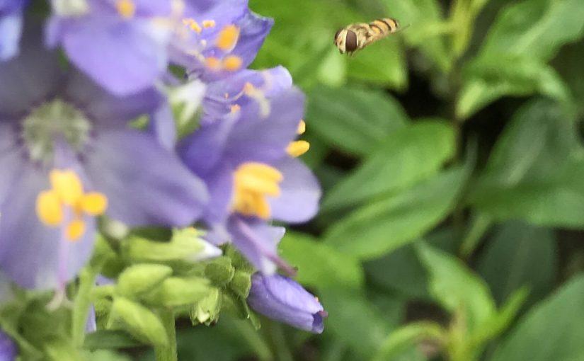Optimaal genieten van planten die zichzelf uitzaaien